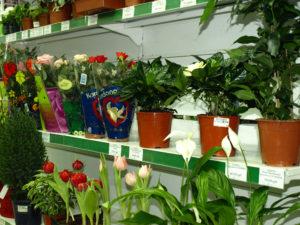Как вернуть цветы в магазин
