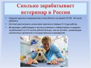 Сколько получает ветеринар в месяц