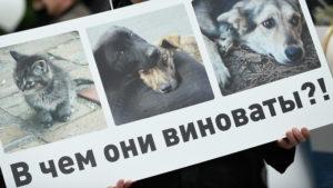 Защита прав животных в россии куда обращаться